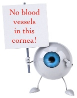 The Cornea is Avascular | Contact Lens Safety